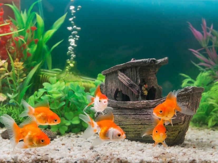 Как купить аквариум?