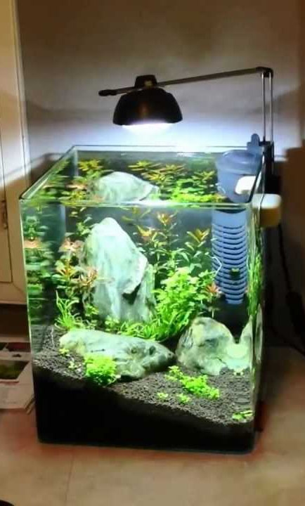 Аквариум EHEIM Aquastyle 24 (24 л) - 3