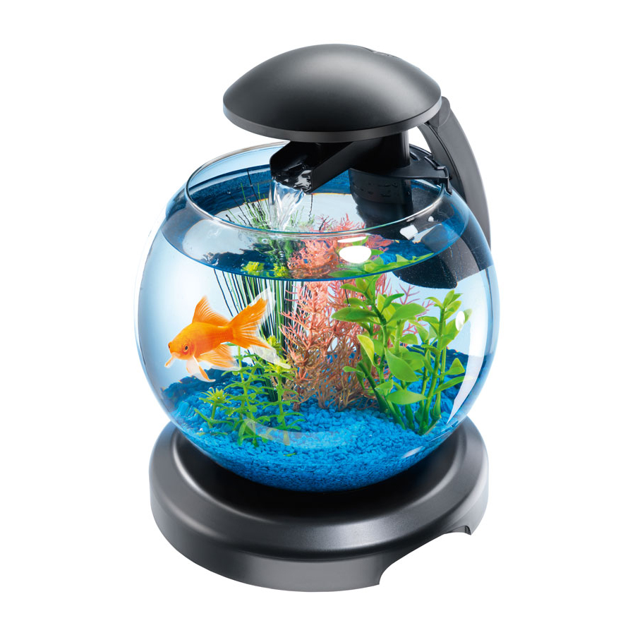 какие рыбки подходят для круглого аквариума поделиться